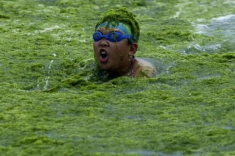 Alghe cina